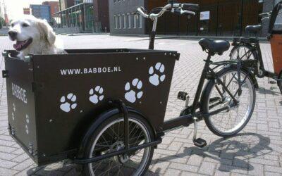 Transporter son animal à vélo : les astuces à découvrir