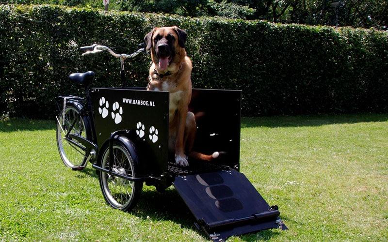 Vélo cargo pour transport chien